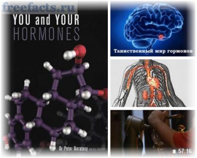 таинственный мир гормонов
